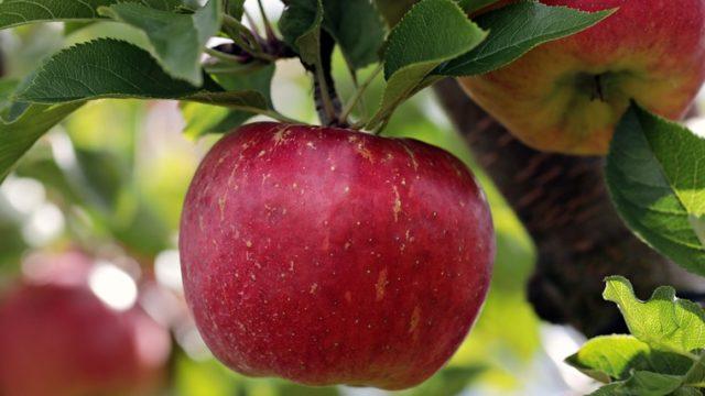 りんごちゃんはいつから女になった?若いころや男時代はどんな?