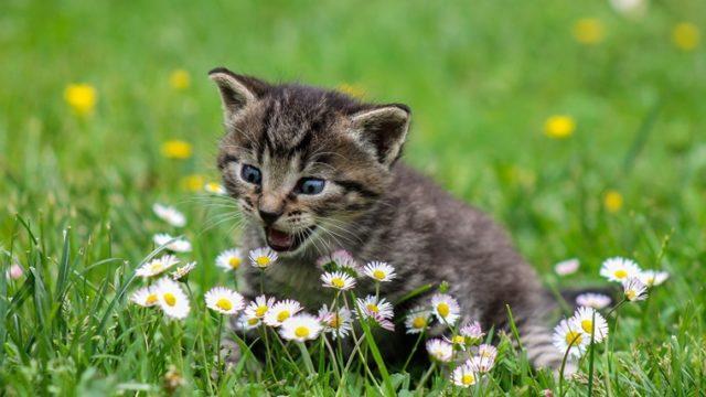 旅猫リポートが面白い!おすすめポイントやみどころを解説!3